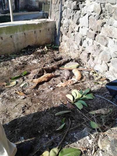Strage di gattini al Granatello: La proposta dei verdi