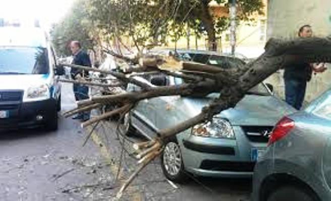 Maltempo, ancora danni a Napoli: tantissimi alberi spezzati dal vento
