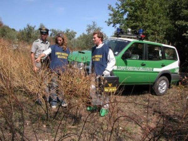 Bruciano rifiuti nel parco Vesuvio, denunciati dai carabinieri forestali