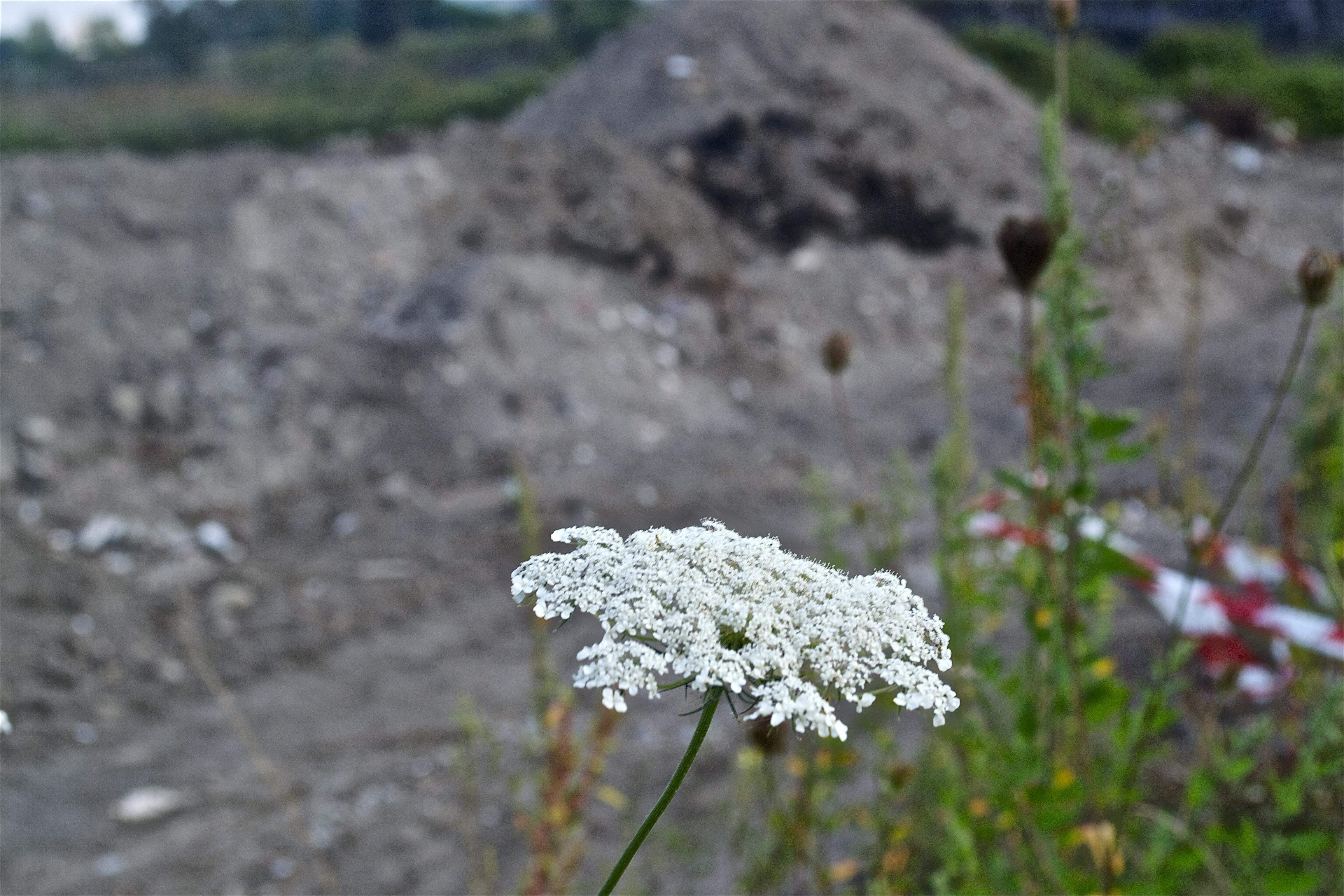 Terra dei fuochi a San Vito al Vesuvio: «Nel prossimo anno, l'Esercito a Ercolano per operazioni di controllo e tutela del territorio»