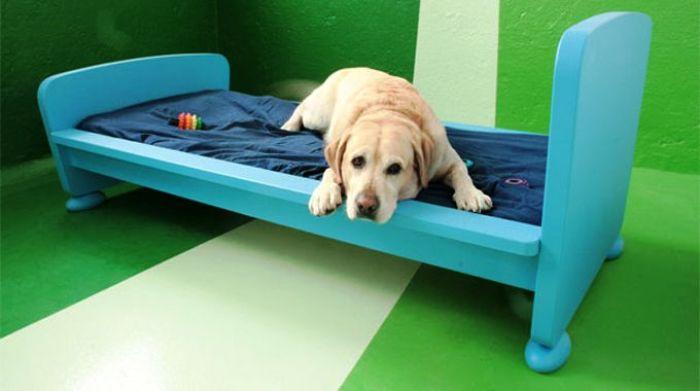Inaugurato a Napoli il primo asilo nido per cuccioli di cane