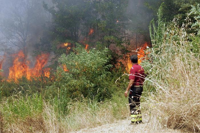Fiamme nel Parco Nazionale del Vesuvio: circa 9 ettari di macchia mediterranea distrutti