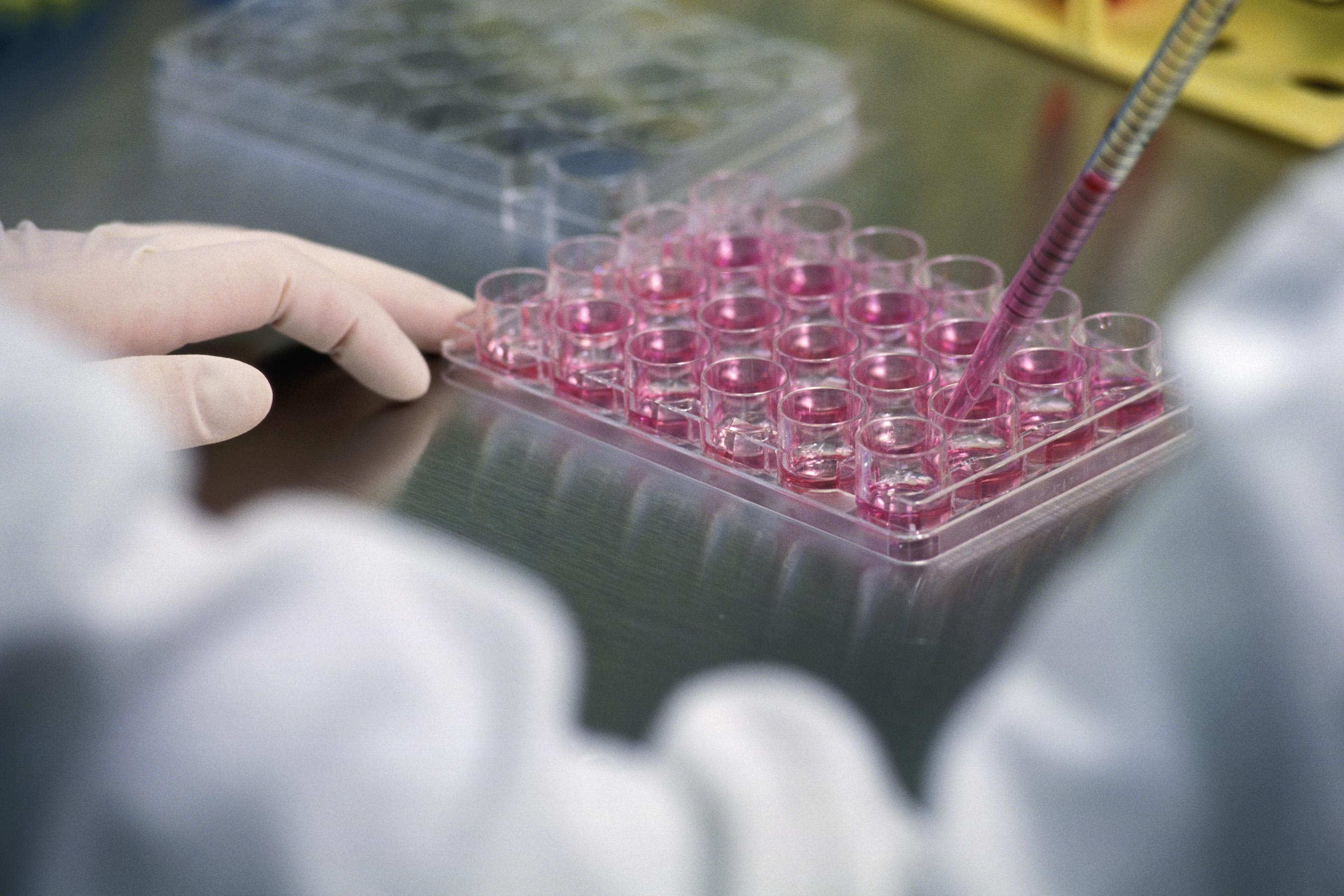 Alla Federico II di Napoli: UniStem Day, giornata di divulgazione della ricerca sulle cellule staminali