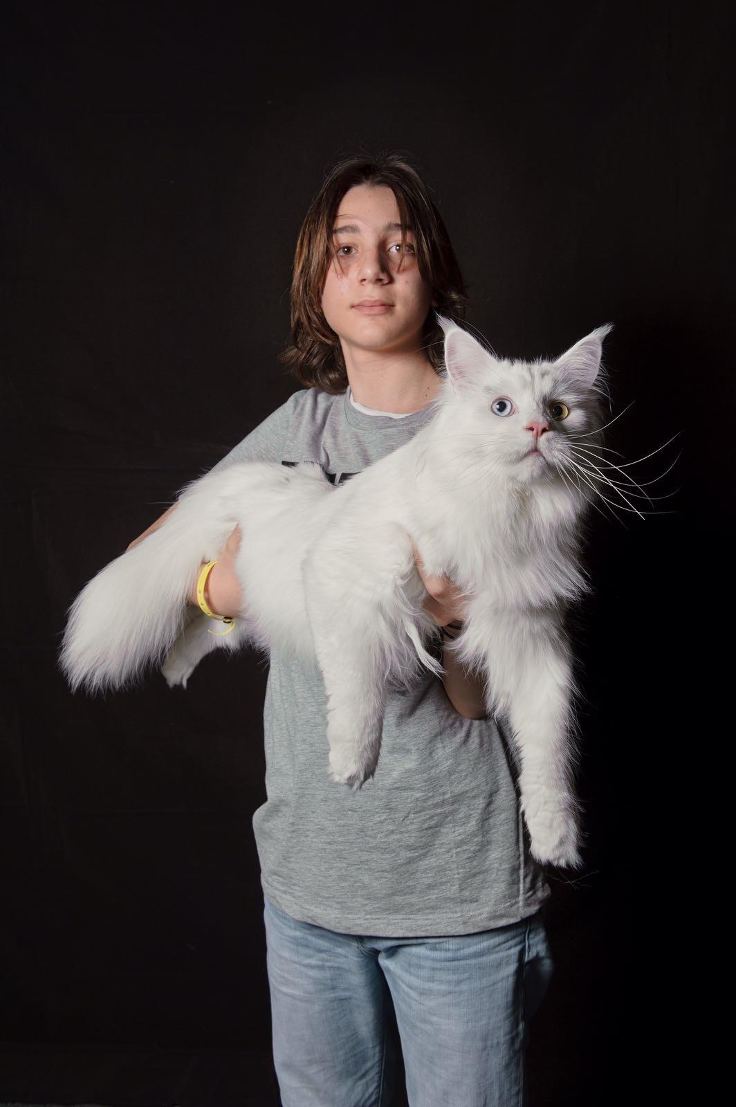 Il fascino felino in mostra al Palaveliero, il 17 e il 18 Dicembre la due giorni dedicata ai gatti