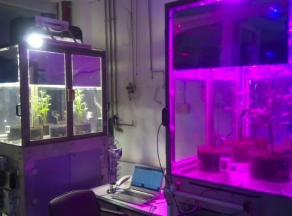 All'Enea di Portici  una serra hi-tech per coltivare nello spazio