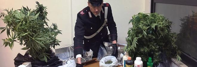 Studenti di Agraria sperimentano con la cannabis indica: i carabinieri smantellano una serra di marijuana