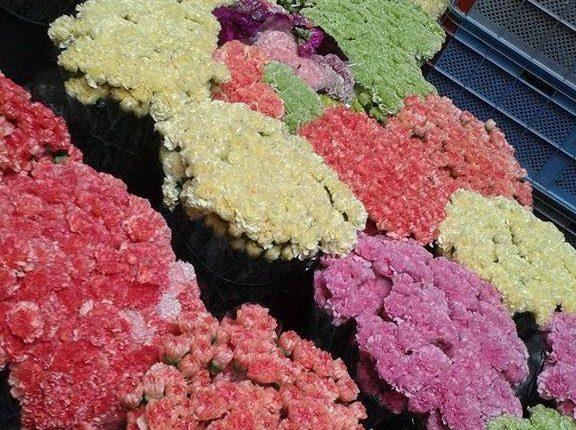 A Portici si aspetta San Ciro. Tre tappeti di fiori per omaggiare il Santo Patrono. Ecco tutte le tappe della processione