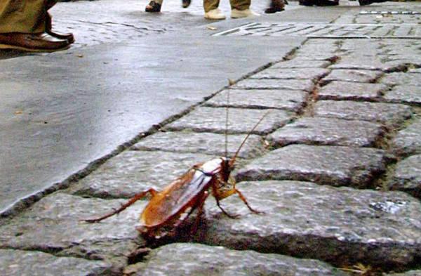 """EMERGENZA BLATTE – Il sindaco de Magistris """"Task force in città, quello delle blatte è un fatto serio, che non riguarda solo Napoli"""""""