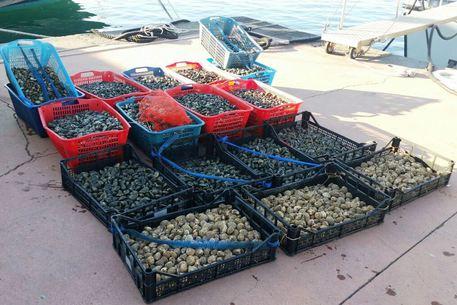 Napoli, sequestrati 300 chili di frutti di mare in cattivo stato di conservazione