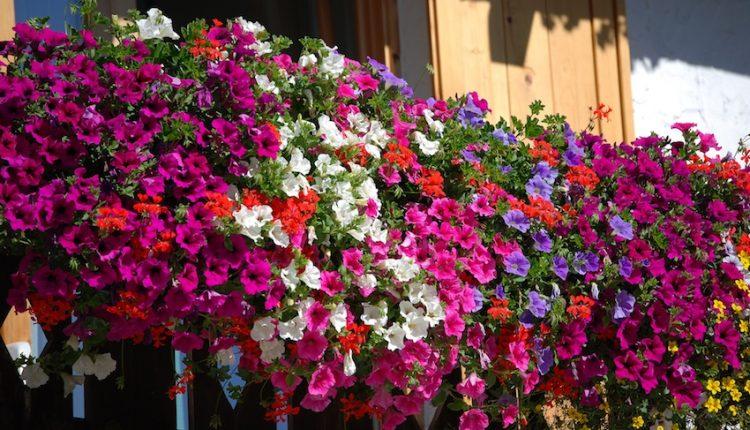 """Portici è mille colori – Un premio per il balcone fiorito più bello in città. La proposta del giornalista diventa un concorso """"made in Portici"""""""