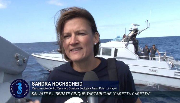 """PORTICI SCIENCE CAFE' – """"Tartarughe Marine nel Mediterraneo: specie ad estinzione o storia di successo?"""