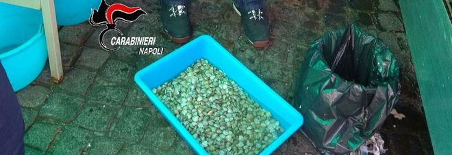 Sicurezza a tavola, maxi blitz dei carabinieri a Napoli: sequestrati frutti di mare e lupini fuorilegge