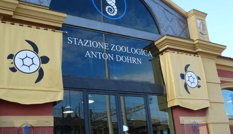 LA RICERCA E IL MARE – Nella giornata mondiale degli oceani, la Stazione Zoologica Anton Dohrn, l'Istituto Nazionale di Biologia Ecologia e Biotecnologie Marine, aprono le porte del Centro Di Ricerca Tartarughe Marine-Osservatorio del Golfo di Napoli di Portici
