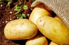 Tutto pronto a Massa di Somma per la 3 edizione della TuberFest, la festa della patata in beneficenza