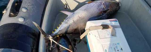 Pesca di frodo, scoperte reti con impigliati tre esemplari di tonno rosso a Torre del Greco