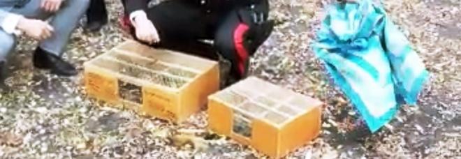 Aveva in casa 77 uccellini di specie protette: liberati dai carabinieri sul Monte Somma
