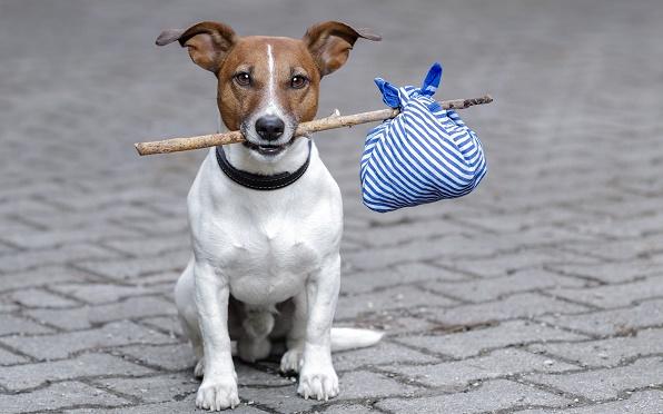 Adozione dei cani e Anagrafe canina a San Giorgio a Cremano:domenica 7 ottobrein Villa Bruno