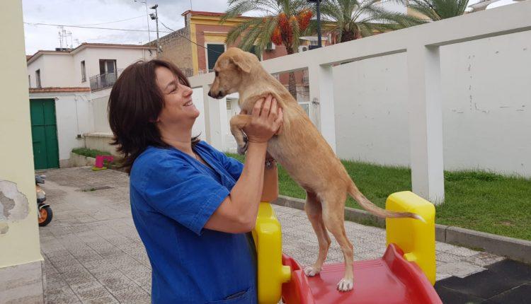 Pomigliano d'Arco, la trovatella «Duchessa» protagonista del progetto pilota che promuove l'adozione di un cane nelle scuole della città