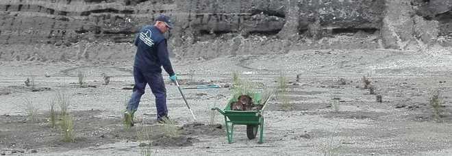Parco Vesuvio, nell'ex cava Ranieritornano a vivere 500 piante