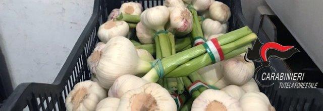 Aglio, patate e cipolle dalla Spagna rivenduti con finto marchio italiano: maxisequestro a Casoria