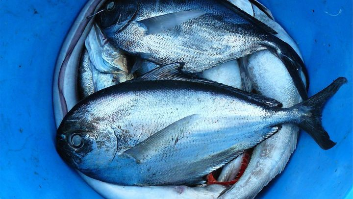 fish-422543_960_720