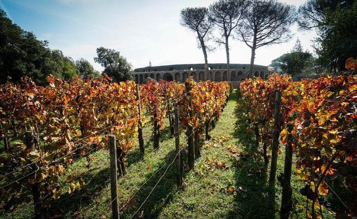 Pompei, nuova vendemmia negli Scavi: restaurata Cella vinaria. Presentato il 'Villa dei Misteri' 2012