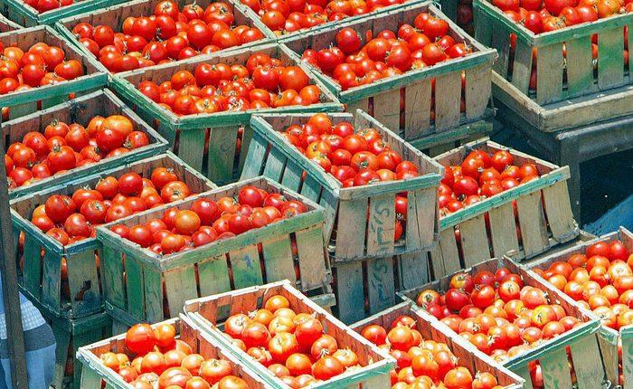 Al via le nuove norme Ue per i controlli sugli alimenti. Stretta anche su frodi e parassiti tipo Xylella