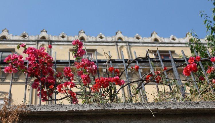 Passeggiata di fine anno lungo le scale del Petraio:n percorso di scale che dal Vomero arriva a Via dei Mille a Chiaia con circa 400 scalini e scorci tutti da fotografare