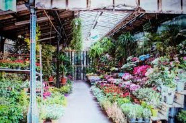 Le mani della camorra sul mercato dei fiori tra Castellammare e Pompei