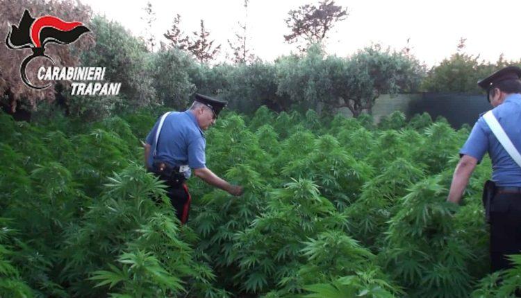Nel Vesuviano 21 chili di marijuana nei pressi dei binari della Circumvesuviana