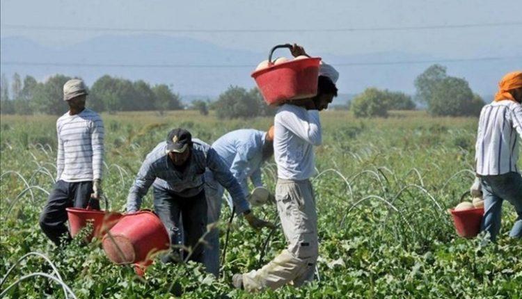 Senza immigrati, agricoltura a rischia crollo: l'appello a De Luca della Cigl