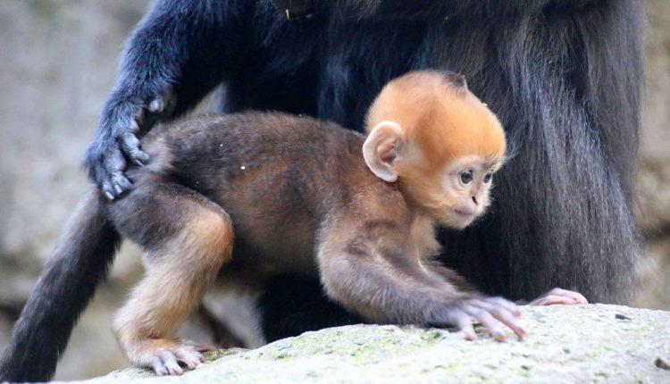 Zoo di Napoli vuoto, ma nascono cuccioli: l'Sos al Ministero