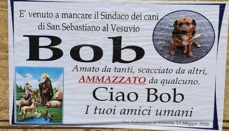 Addio Bob, un manifesto funebre da il triste annuncio della morte del sindaco dei cani di San Sebastiano al Vesuvio: investito e non soccorso da un pirata della strada