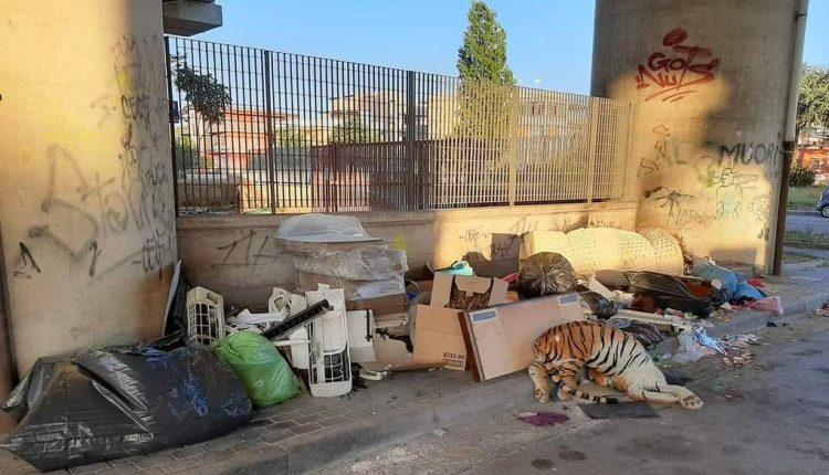A Pomigliano d'Arco sotto il ponte della Circumvesuviana una tigre fa la guardia ai rifiuti abusivi