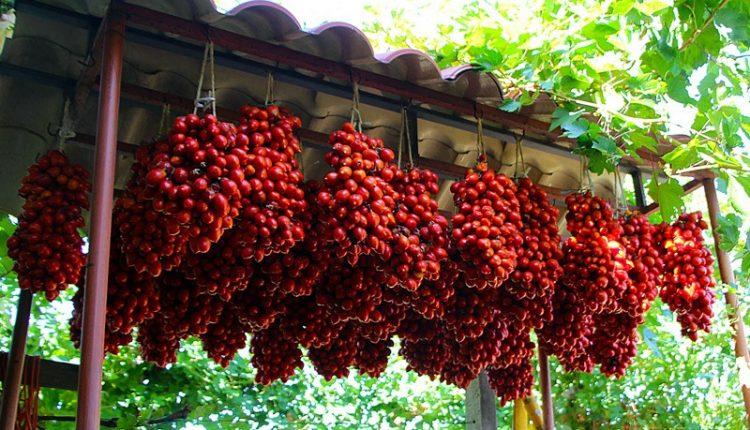 A San Sebastiano, due giorni per raccogliere e degustare il pomodorini  del piennolo dop targati Ciro Punzo