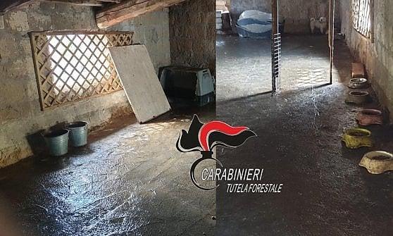 Tre sequestri di cani in una mattina nel napoletano ad opera deicarabinieri forestali