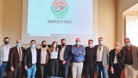 Mozzarella Dop, eletto il nuovo Cda del Consorzio di Tutela: giovani e donne under 35 le new entry nell'organismo