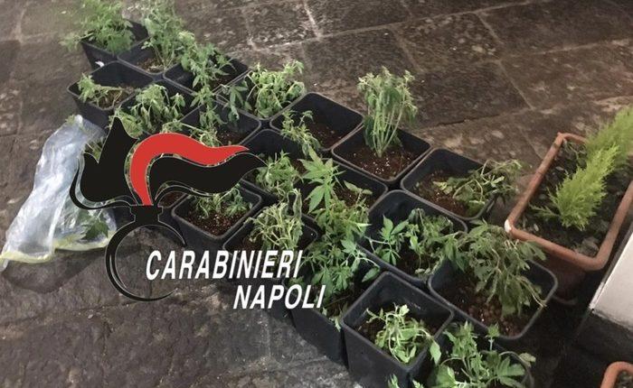 Revolver e giubbotti antiproiettile in un terreno agricolo: i carabinieri trovano anche 86 piantine di marijuana in casa di un immigrato