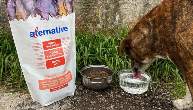 L'associazione Vesuvio's Dog di San Giuseppe Vesuviano beneficerà per alcuni mesi di una grossa donazione di cibo per gli animali. L'aiuto da parte di LAV, Europa Verde e una fondazione animalista francese