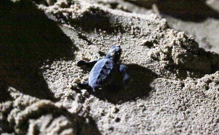 LE TARTARUGHE RESILIENTI – A Napoli, un gruppo di pescatori ha trovato un nido tartarughe su litorale di San Giovanni