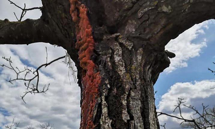"""A Somma Vesuviana le """"piante che piangono"""" fotografate dalla contadina cuciniera Libera Feola"""