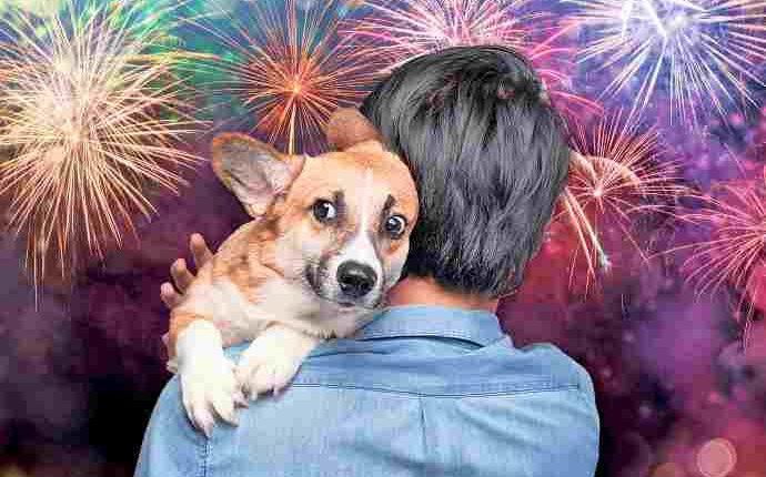 """A Portici fuochi d'artificio tutte le notti e cuccioli terrorizzati. Il M5S: """"L'amministrazione comunale ignora il problema e si finge animalista"""""""